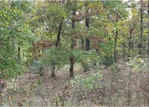 Autumn Woods  RD  Fayetteville, Arkansas
